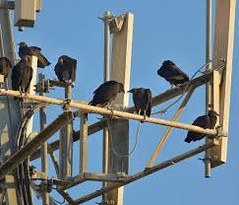 Bird Control Abu Dhabi